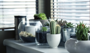 Make Your Rental Feel Like Home - Plants