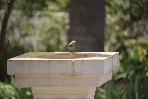 Bird Bath Lawn Ornament