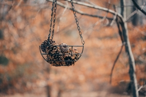 Bird Feeder Lawn Ornament