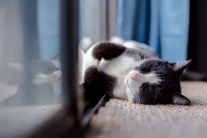 Cat - Pet Friendly