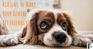 Reasons to Make Your Rental Pet Friendly