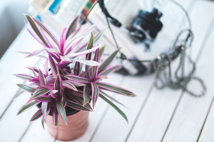 Indoor Plants - Decorate Your Home