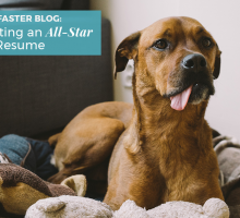 Creating an All-Star Pet Resume
